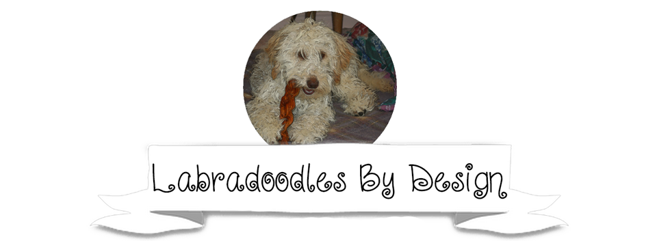 Labradoodles By Design