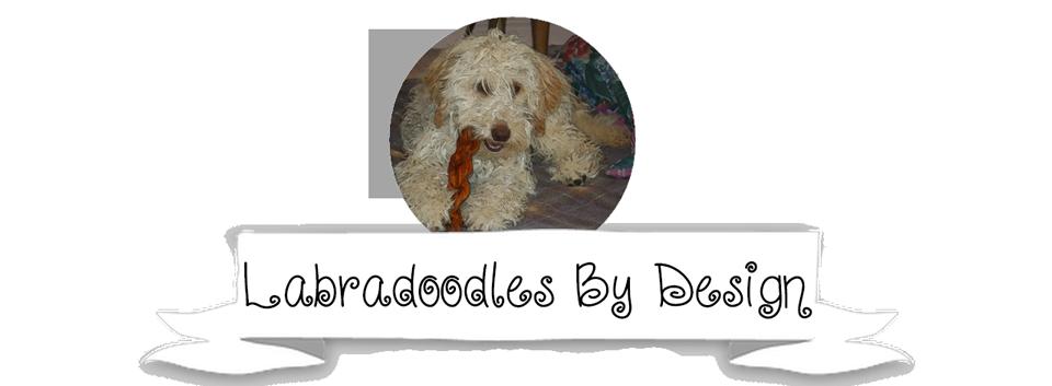 Labradoodles By Design