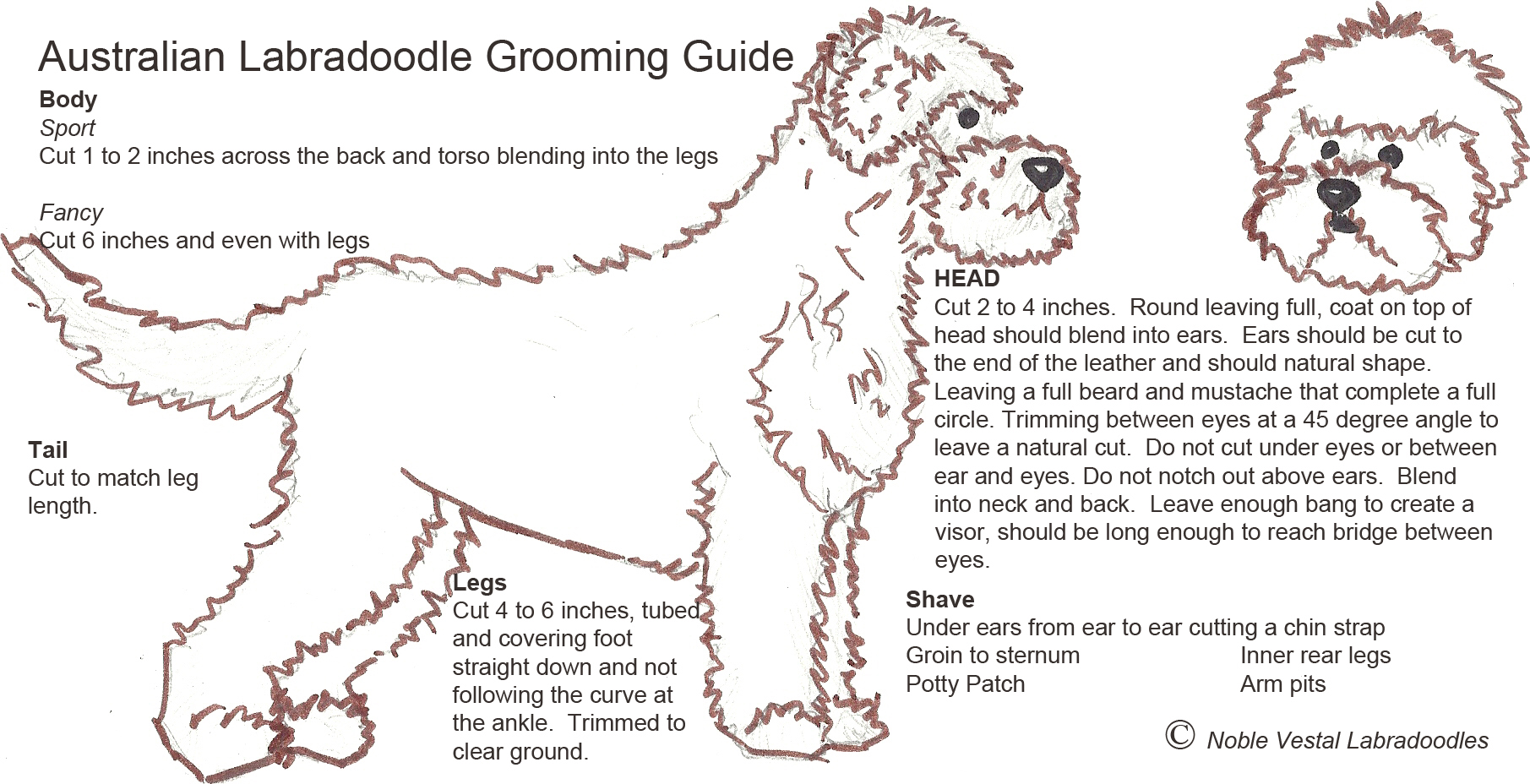 Grooming – Labradoodles By Design